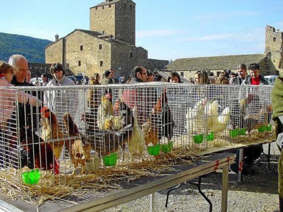 Exhibición de pollos y gallinas en una pasada edición de la Ferieta de Aínsa