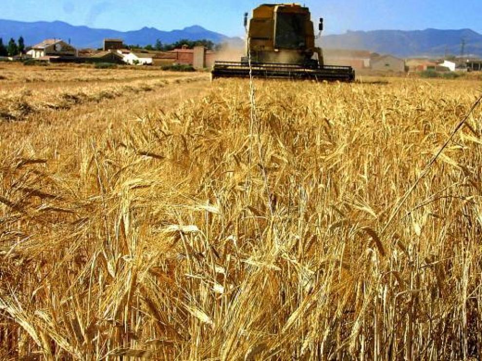 El Gobierno aragonés convoca 150.000 euros en subvenciones para el sector agroalimentario