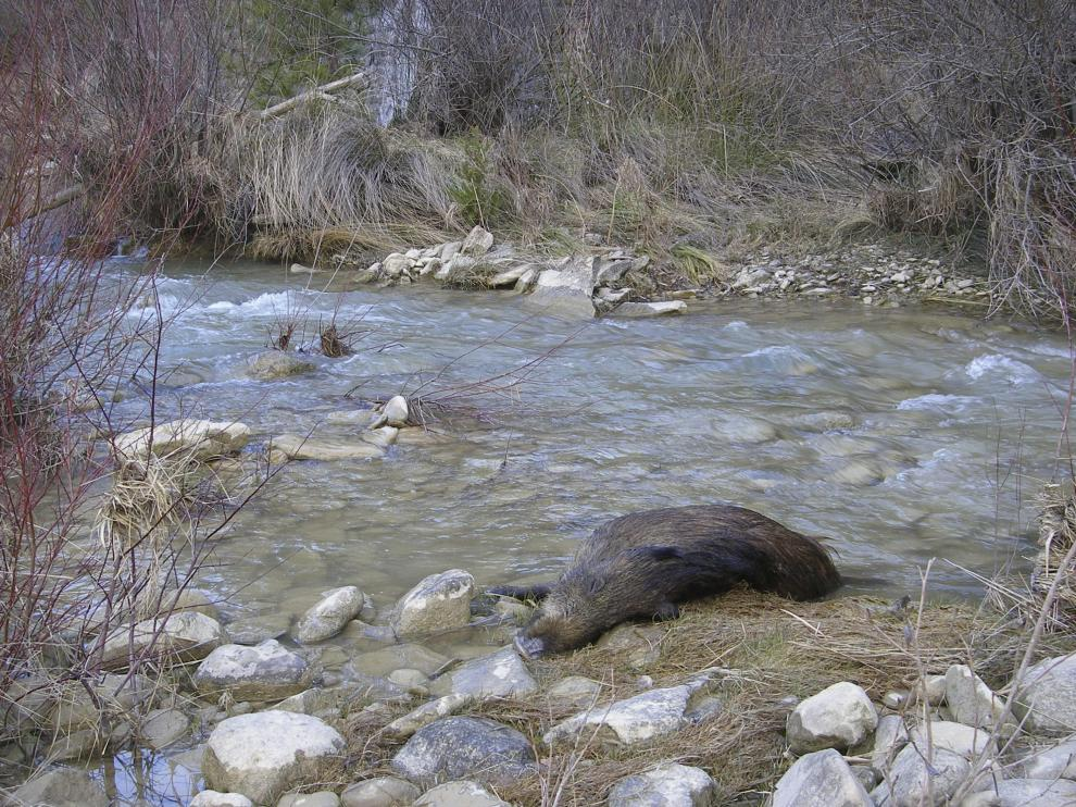 Uno de los animales que encontraron muerto a principios de mes.
