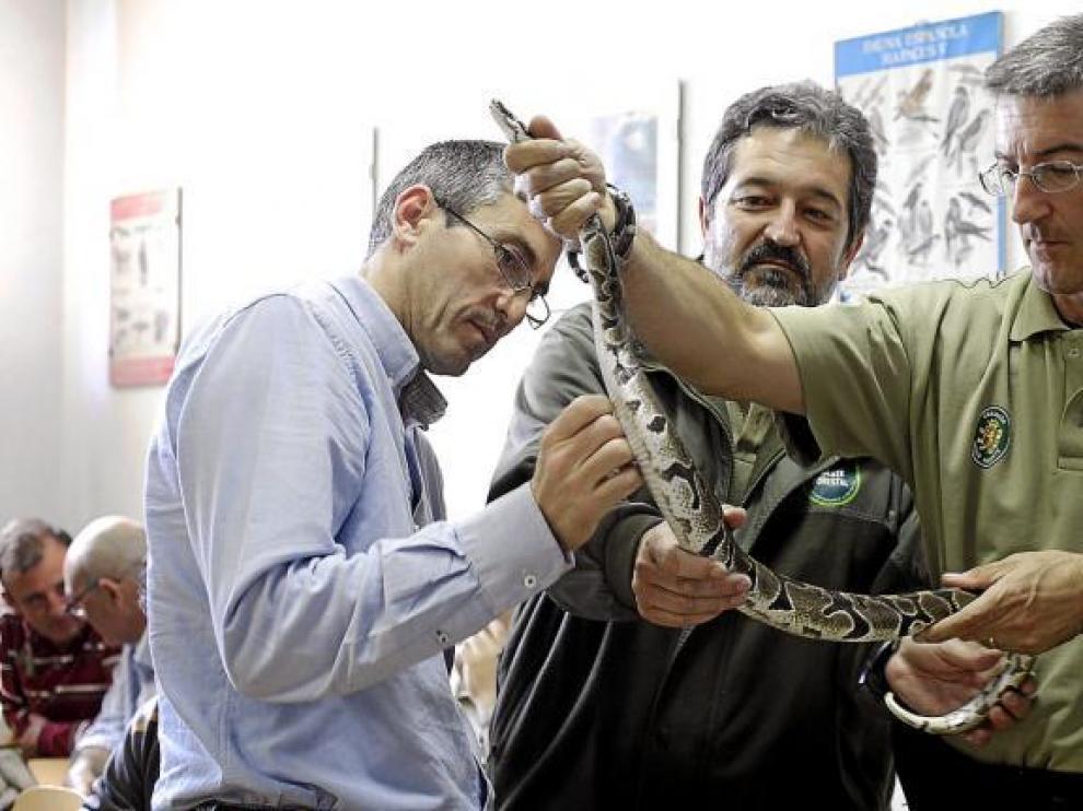 Imagen de una serpiente, de archivo