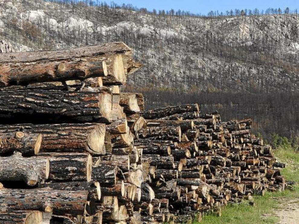 Ya han comenzado la limpieza de los montes y la retirada de troncos, aunque todavía quedan muchas zonas con pinos quemados.