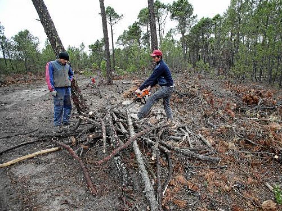 Unos operarios cortan ramas -biomasa- en un monte de Bezas, en la Sierra de Albarracín.