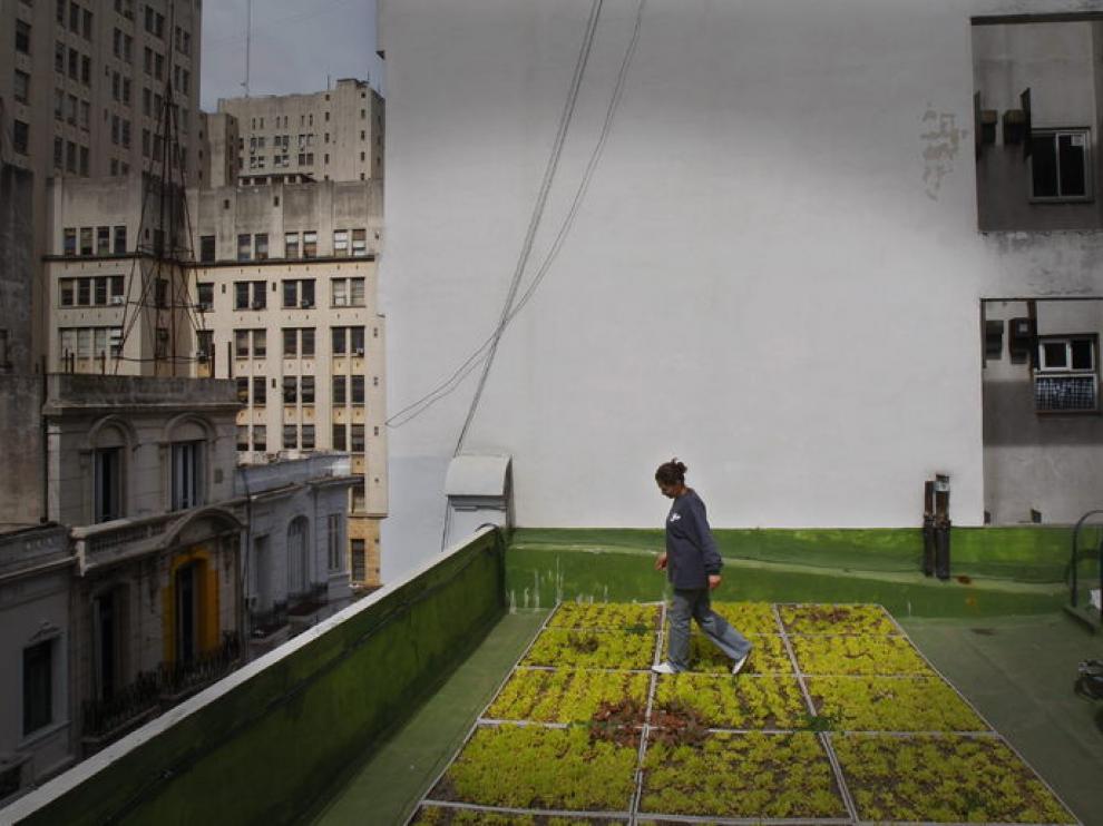 Huertos en una terraza de Buenos Aires