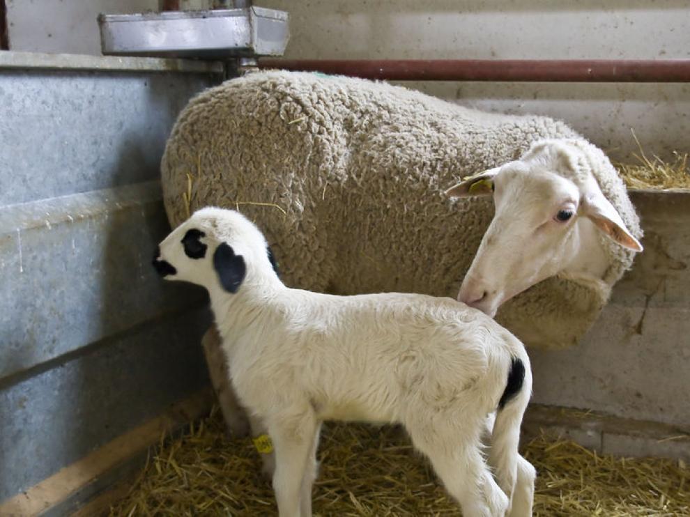 Numantino, con su madre, en Veterinaria