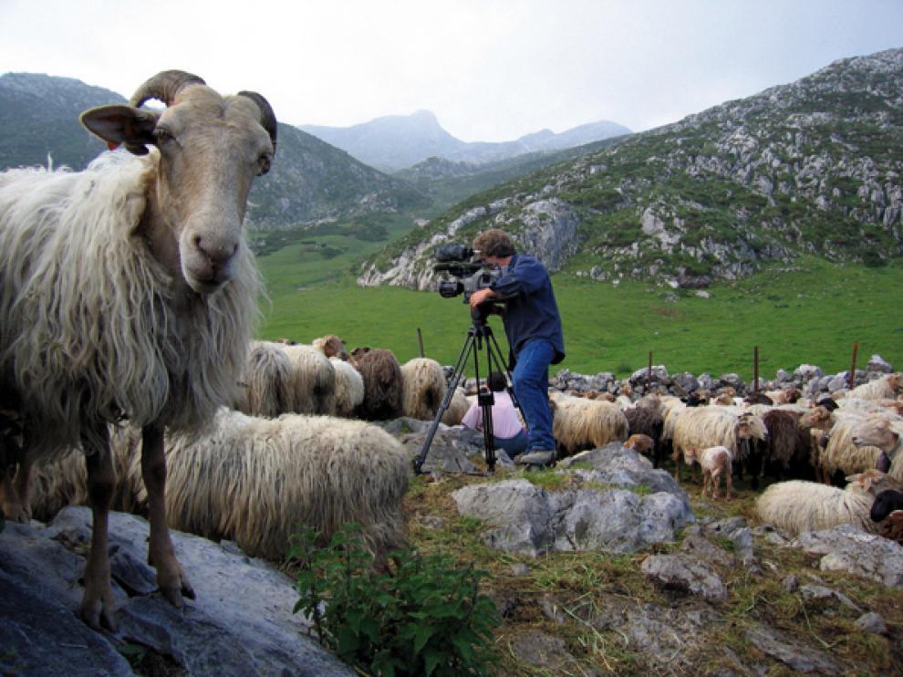 Moreno filmando entre ovejas latxas