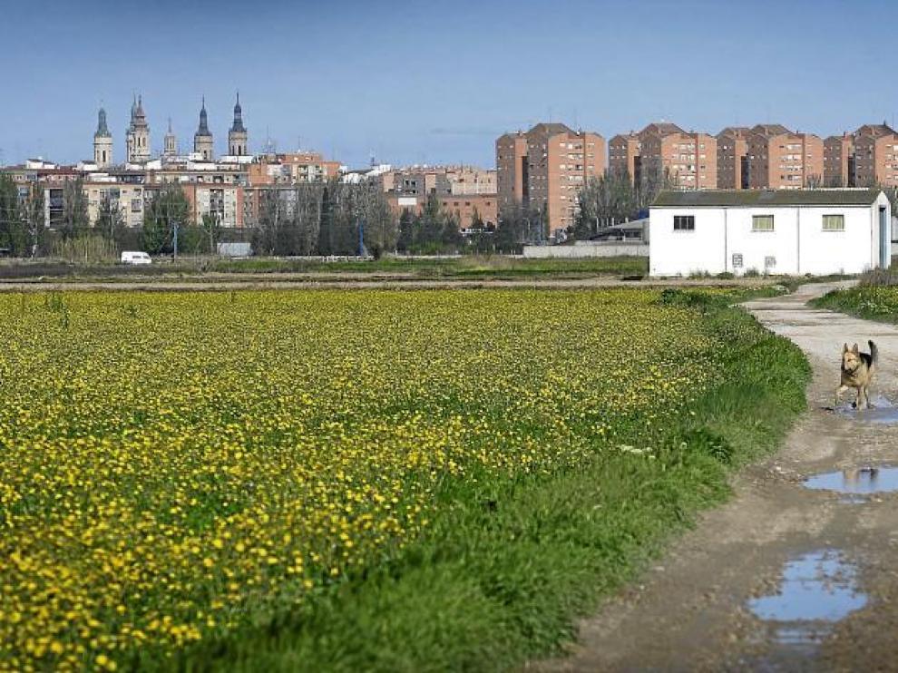 Imagen de la huerta de Las Fuentes, donde el Ayuntamiento quiere construir unas 2.700 viviendas.