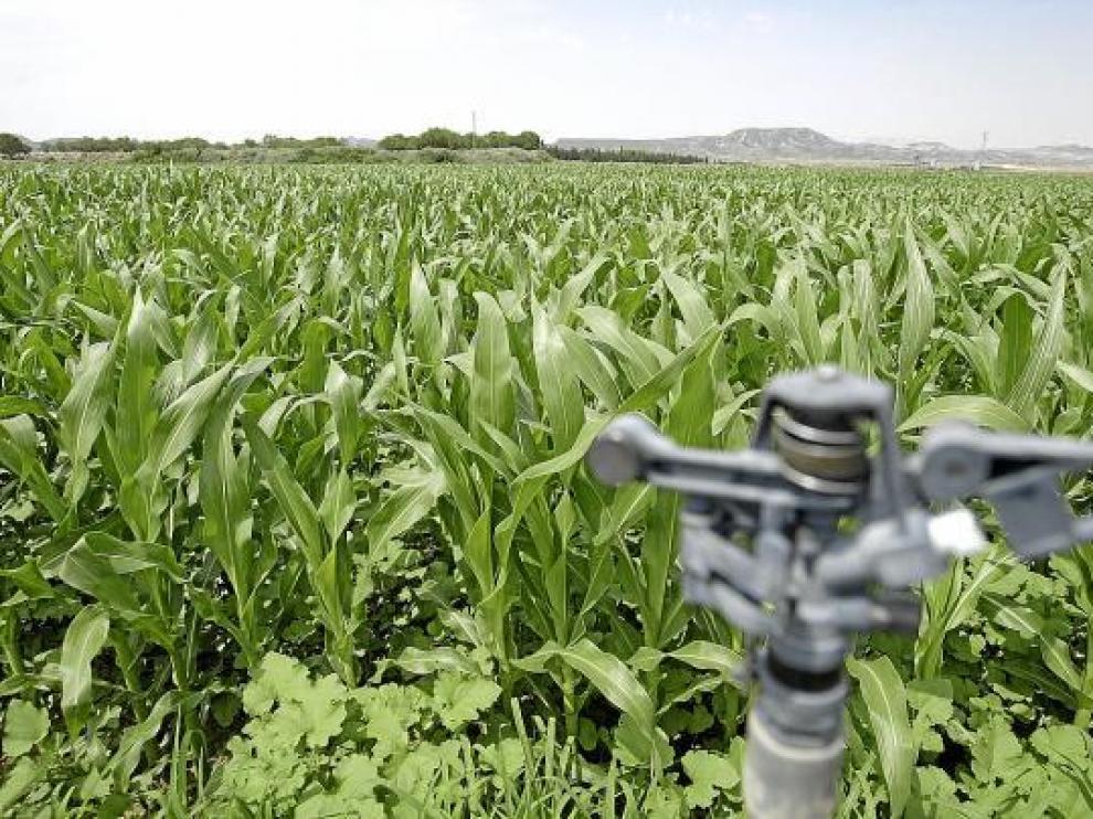 Las mejoras en los sistemas de riego son inversiones que cuentan con ayudas a la modernización.