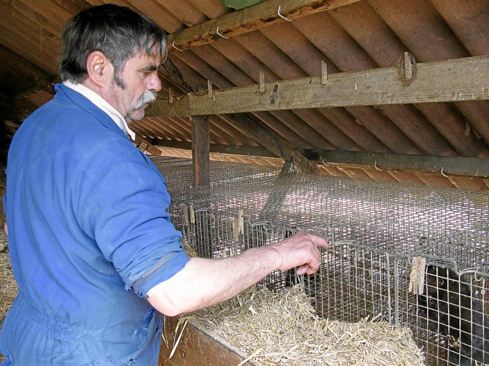 La granja de visones de Albalate ya fue asaltada en marzo de este año.