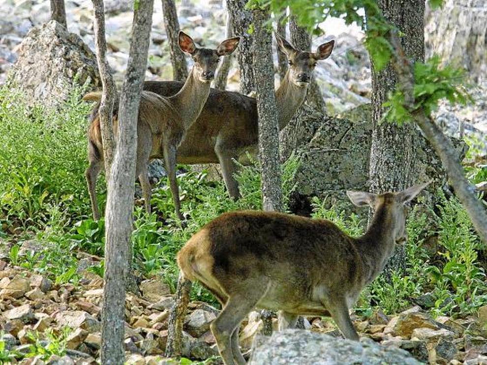 Varios ciervos en una imagen de archivo de la reserva Montes Universales.