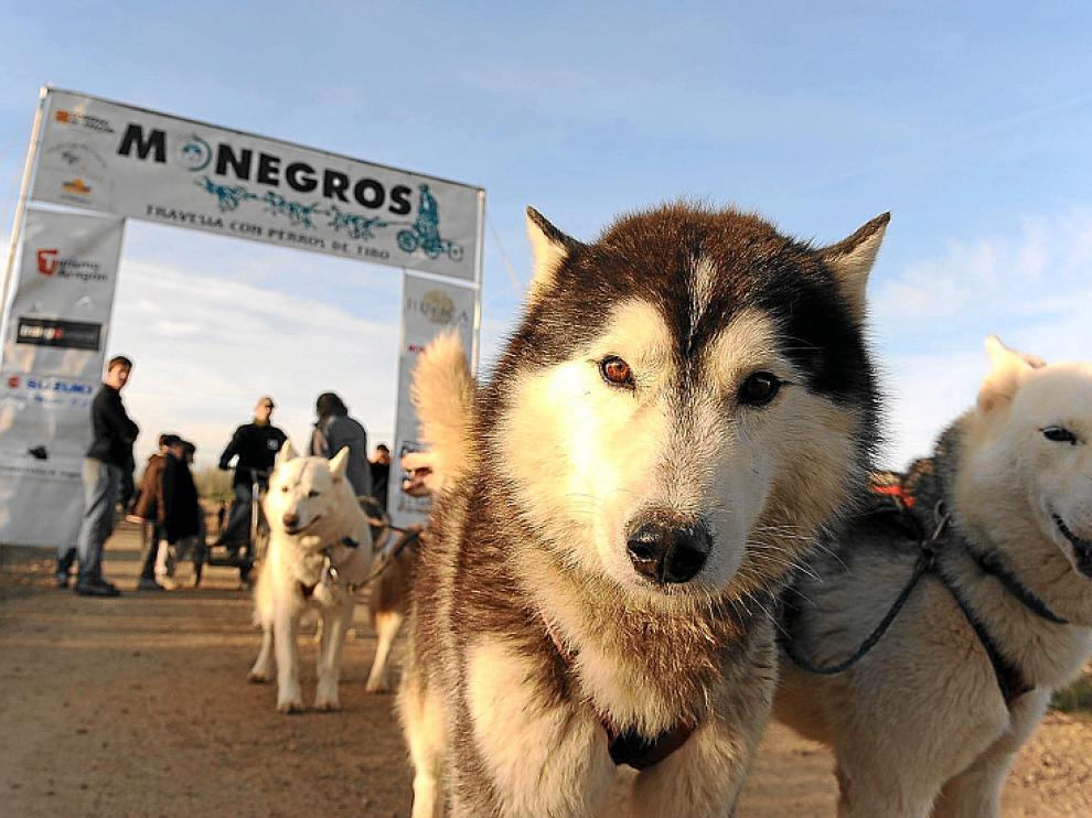 Los perros, protagonistas de la cita monegrina.