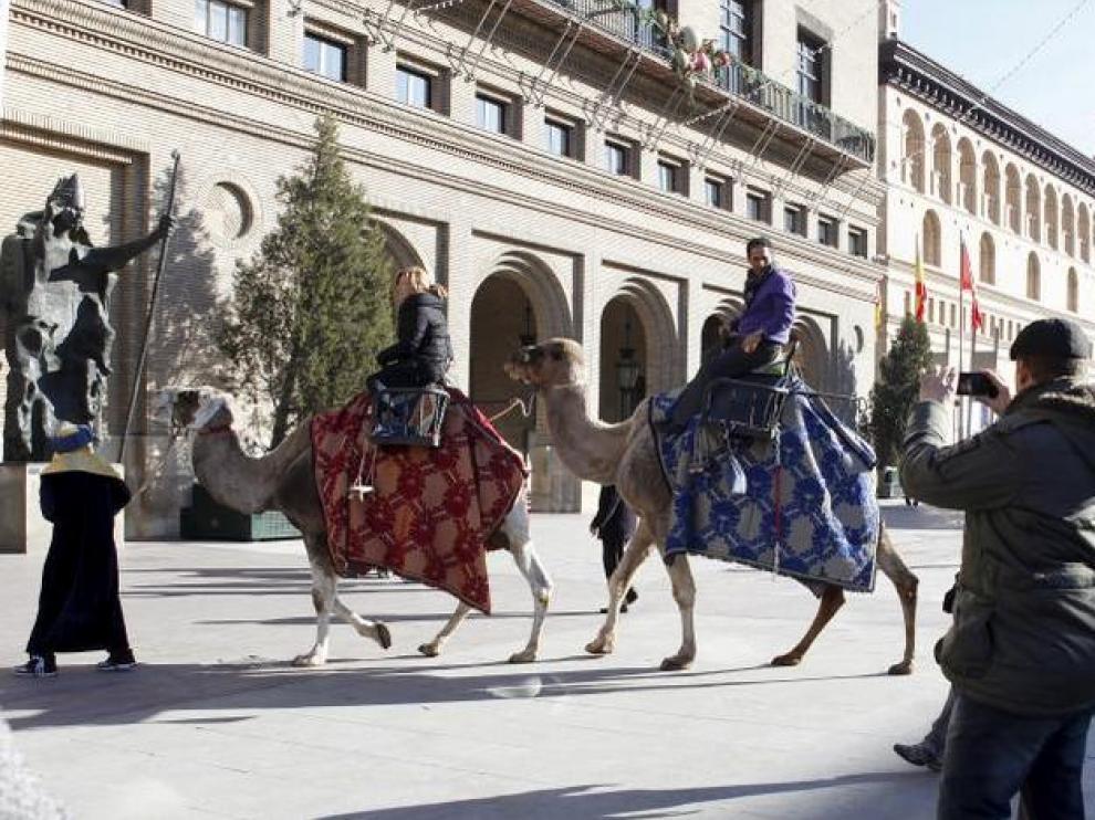 Los dromedarios componen una estampa sorprendente en la plaza del Pilar.
