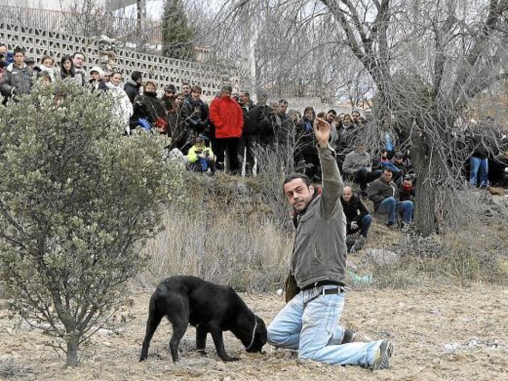 El concurso de búsqueda de trufas con perros despertó expectación entre el público asistente a la feria.