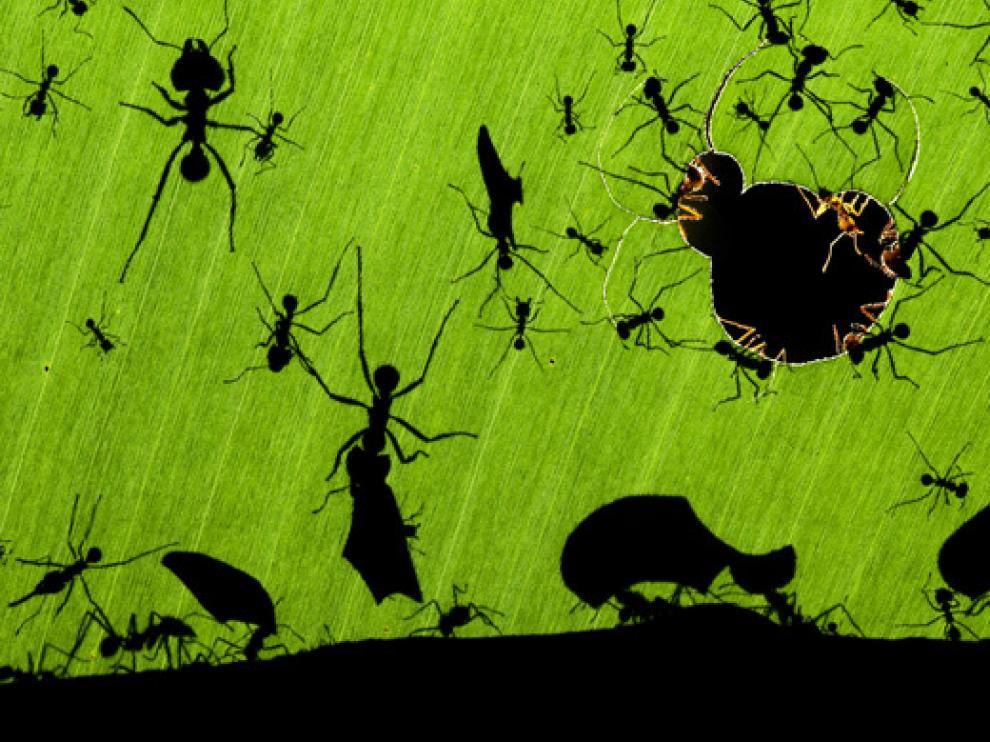 Una maravilla de hormigas