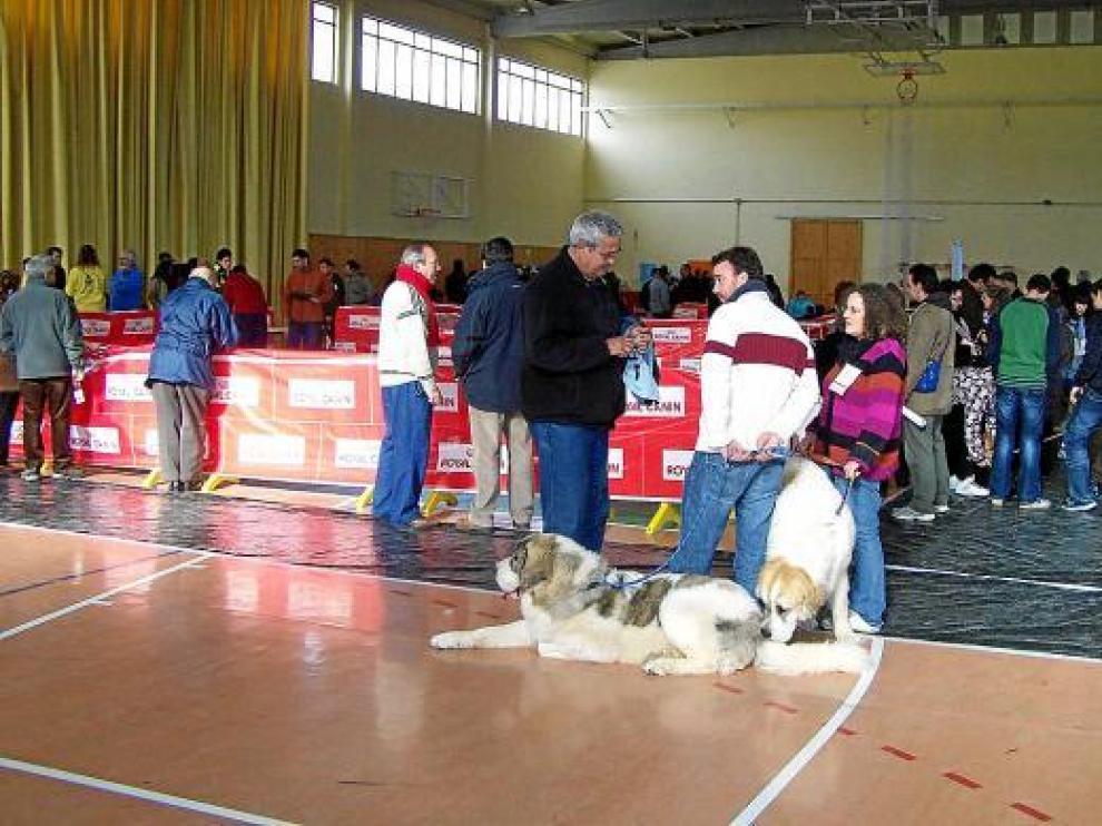 El pabellón polideportivo de Graus estuvo muy animado en el concurso canino celebrado el domingo.