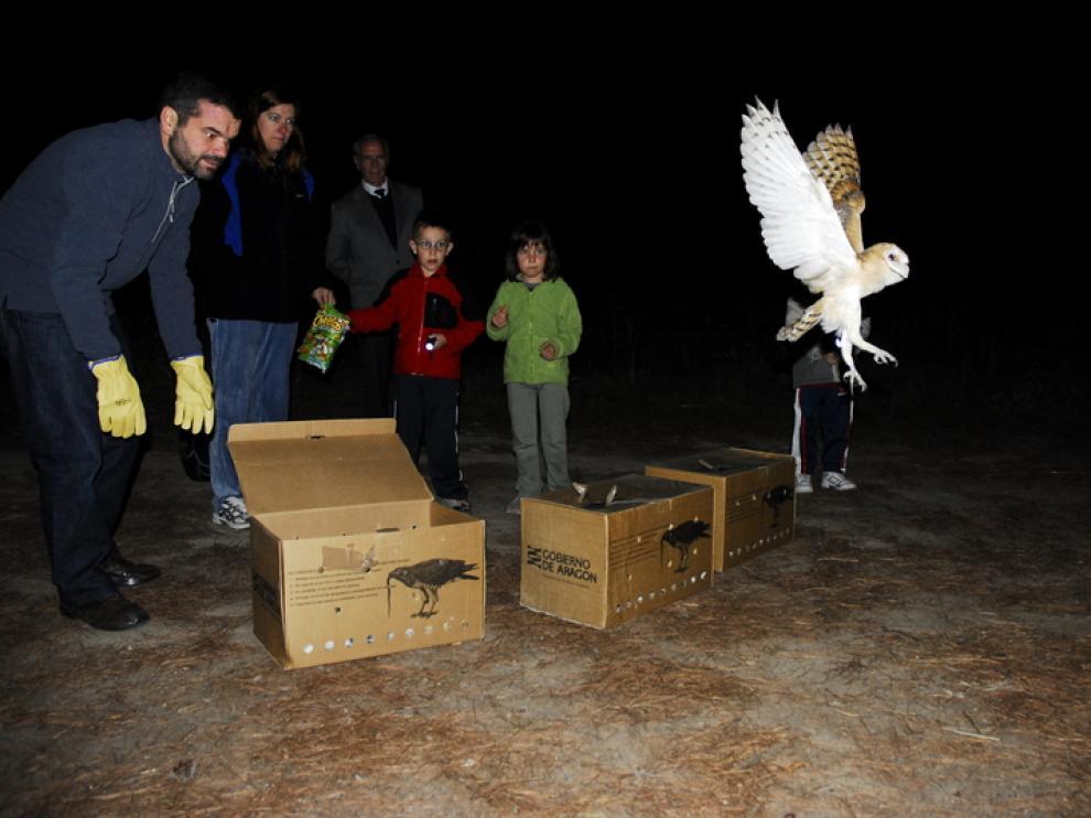 Suelta de una lechuza curada en el Centro de fauna de La Alfranca