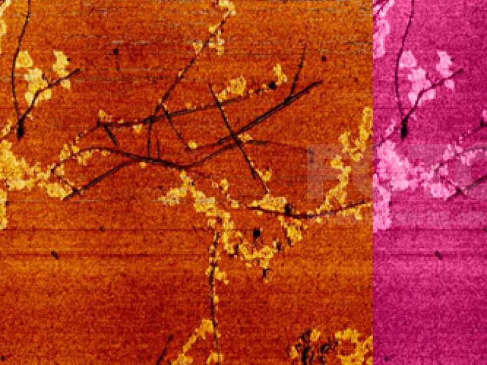 'Sakura', obra ganadora del premio 'Año Internacional de la Química' de Fotciencia