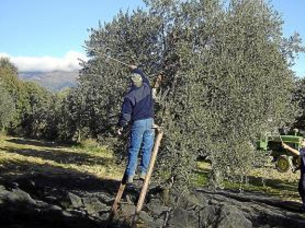El sector olivarero atraviesa un complicado momento.