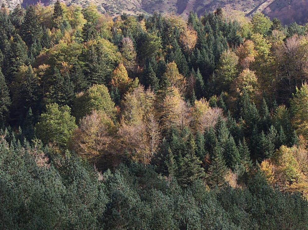 Selva de Oza en otoño