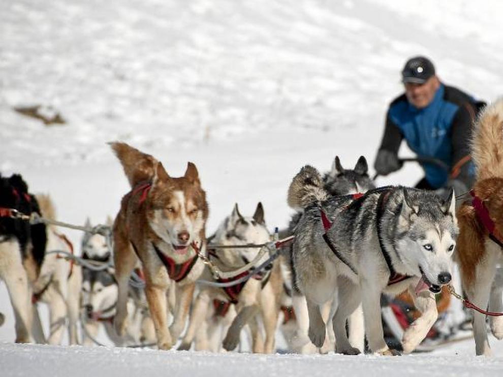 Imagen de un trineo tirado por perros huskys en la estación invernal de Cerler.