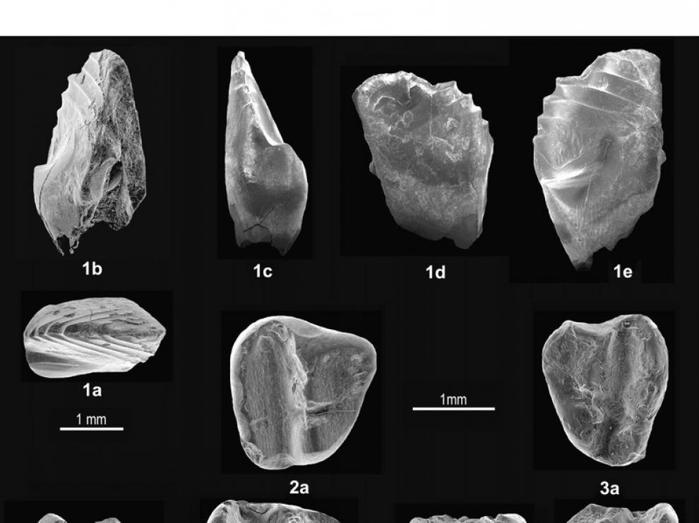 dientes del nuevo mamífero de los tiempos de dinosaurios que hemos descrito en Galve. Son fotos de Microscopio Electrónico de Barrido porque son muy pequeños.