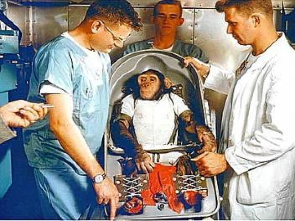 El chimpancé Ham se prepara para viajar al espacio.