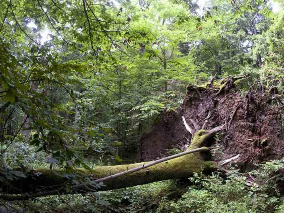 La superficie forestal se está degradando