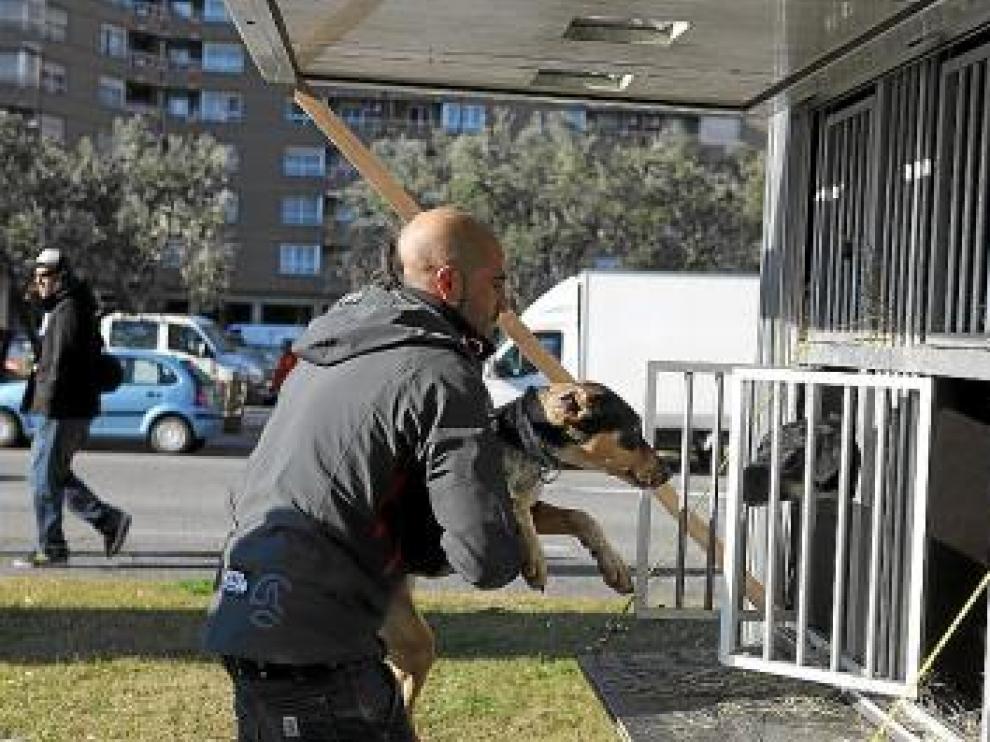 Iker Ozkoidi, campeón en 2009, recoge a uno de sus perros