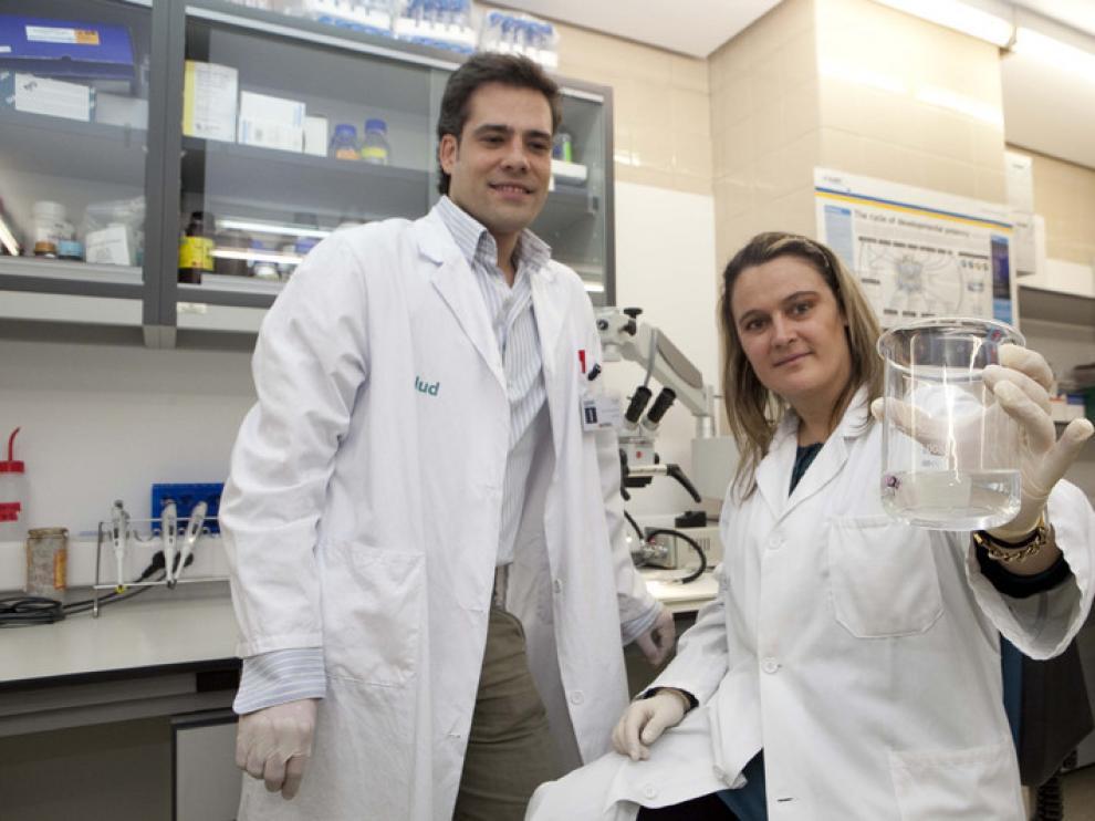 Carlos Sáez Guillén y Pilar Martín Duque muestran un vaso de precipitado con un hígado de rata descelularizado