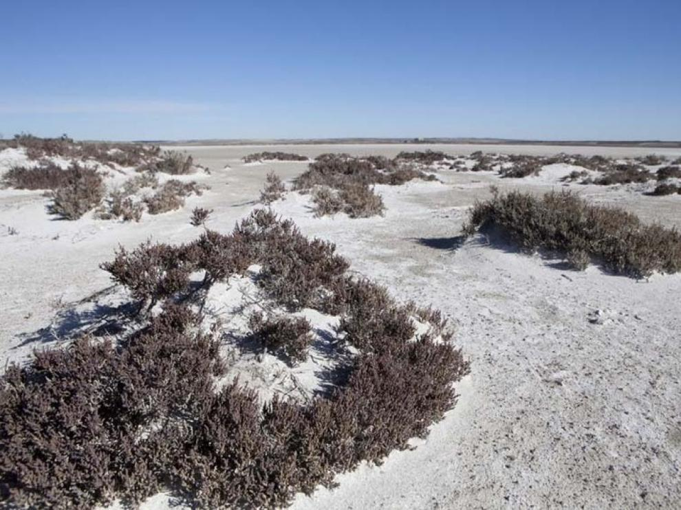 Las saladas de Sástago y Bujaraloz ocupan una superficie de 8.144 hectáreas