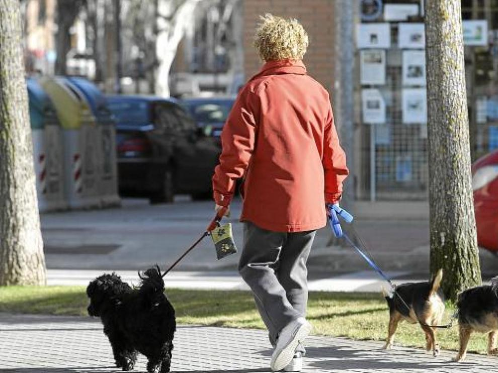 Una señora pasea a sus perros llevando un portabolsas atado a la correa de uno de ellos.