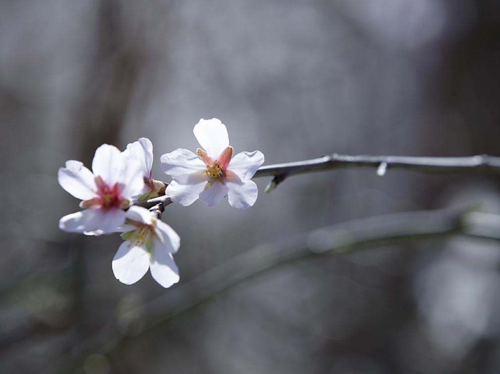 La primavera llega a Aragón