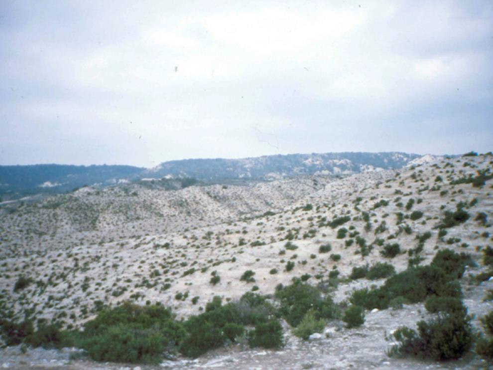 Estepa, al sur de Torrero