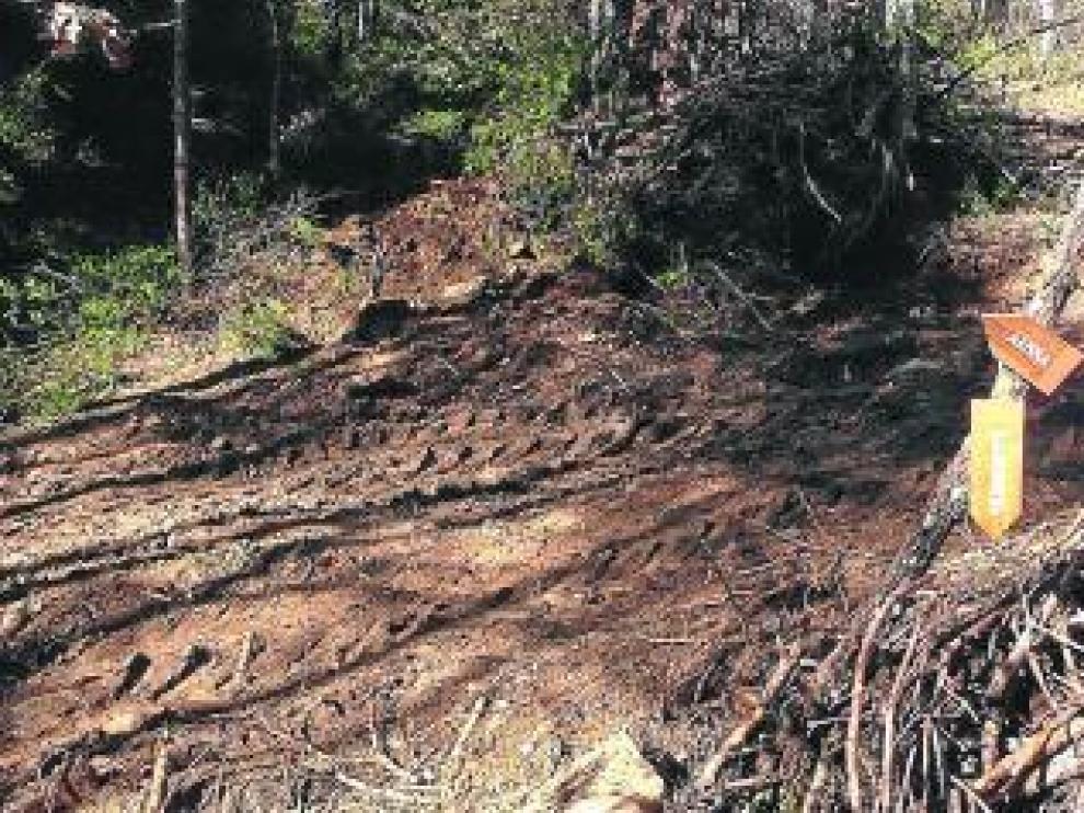 La tala de pinos acabó con parte de la señalización.