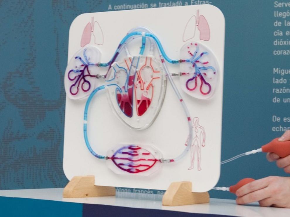 Maqueta del sistema circulatorio