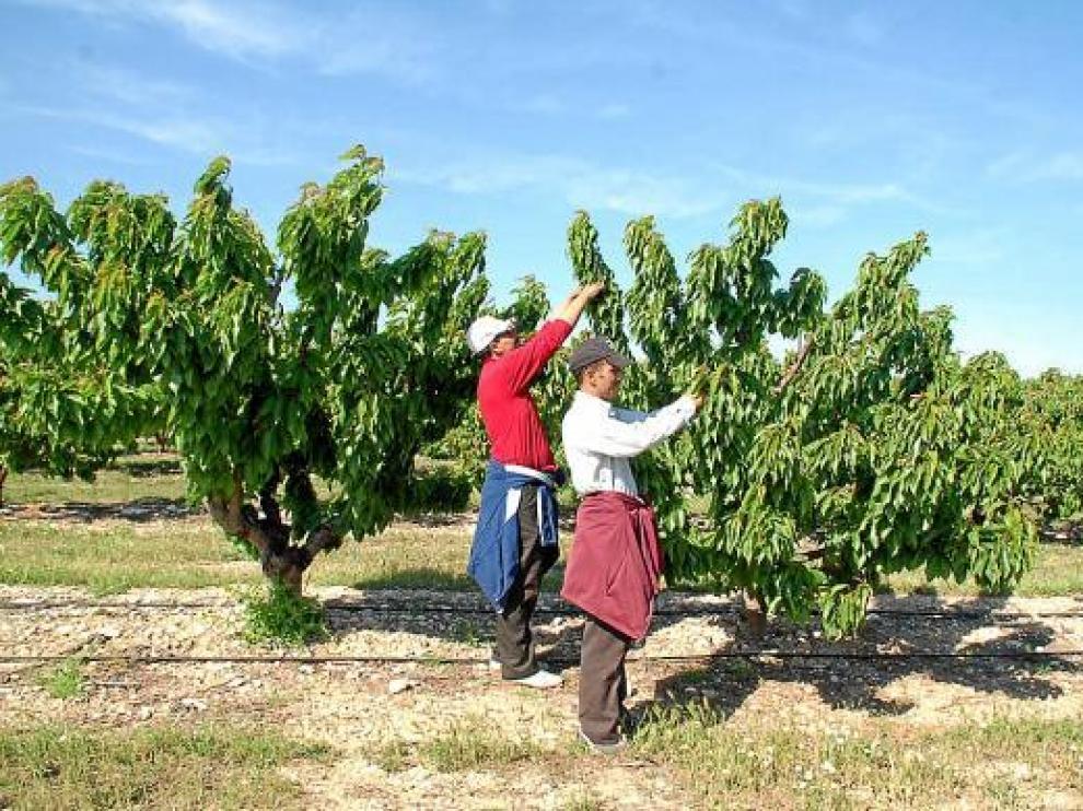 El nuevo convenio regulará las condiciones laborales de los trabajadores del sector primario.
