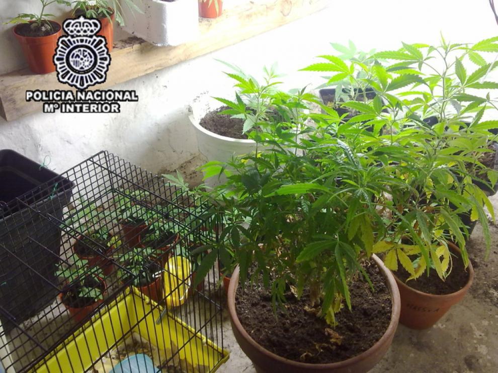 Imagen de una planta de marihuana, en una imagen de archivo