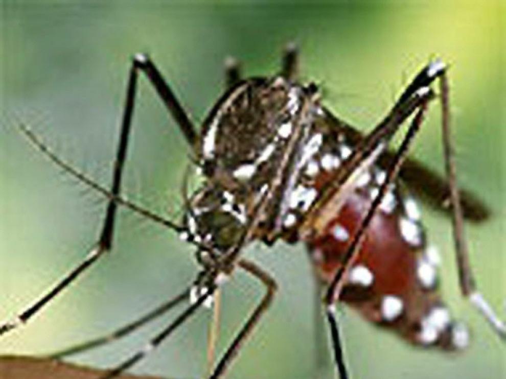 Controles de tráfico para encontrar los mosquitos tigre escondidos en los coches