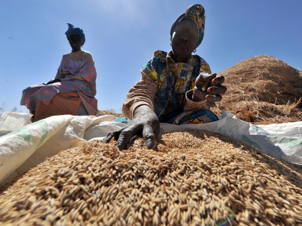 África está ensayando nuevas formas de cultivo