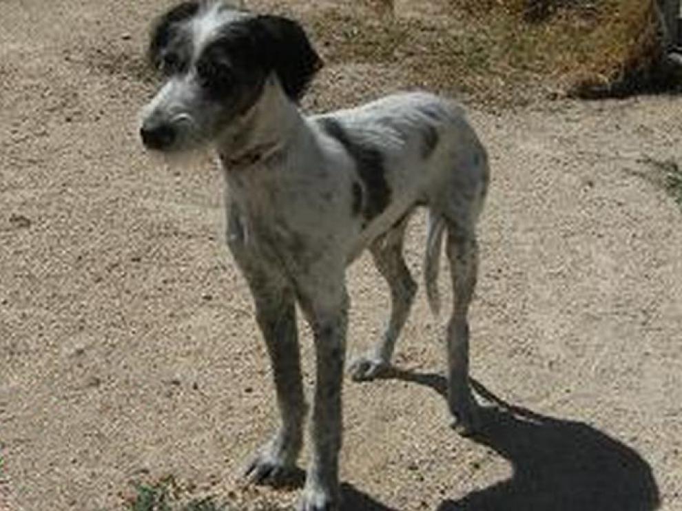 Duende es uno de los 113 animales que, actualmente, se pueden adoptar en el Centro de Protección Animal