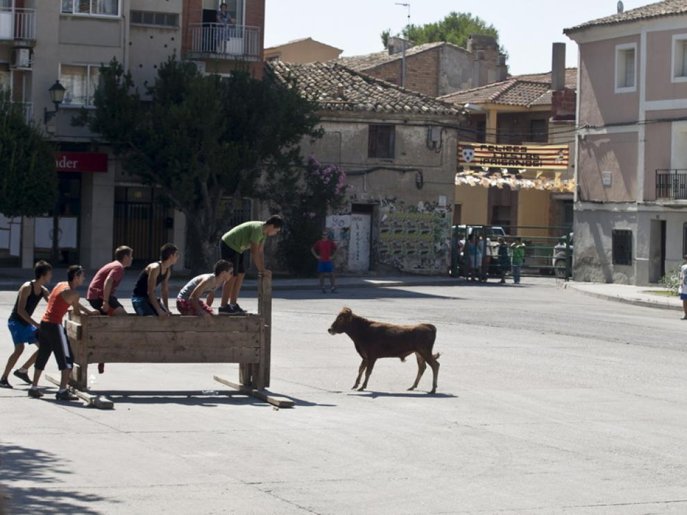 La mañana en Pina de Ebro comenzó ayer con los encierros en la plaza de España.