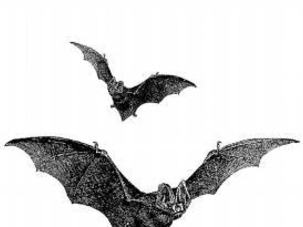 La noche de los murciélagos.