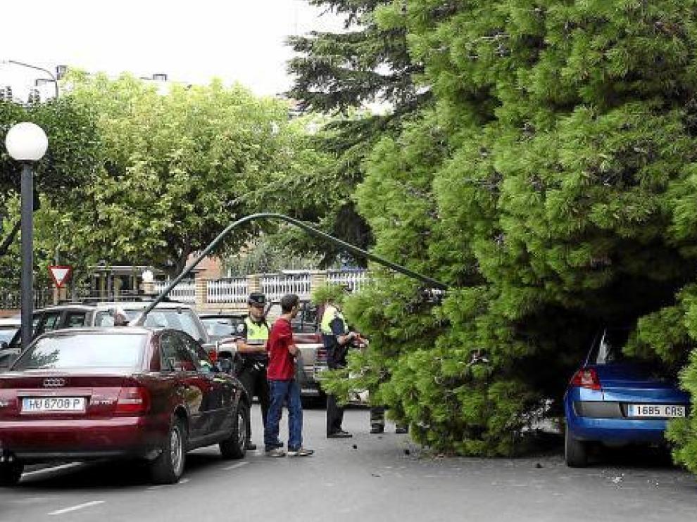 El árbol de grandes dimensiones arrancó una farola, que cayó sobre un coche aparcado.