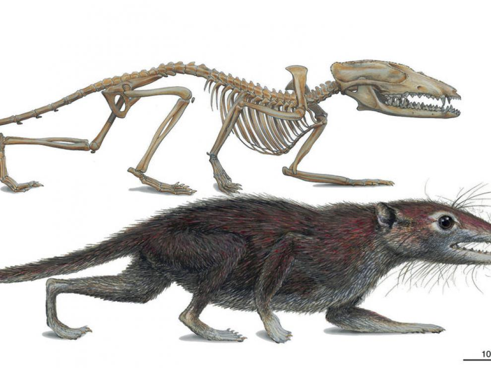 El fósil encontrado en China es el mayor ancestro de los humanos