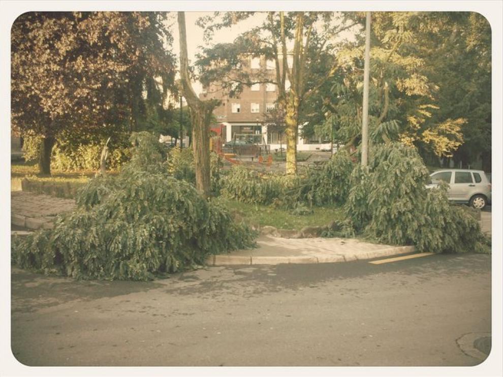 La tormenta provocó la rotura de algunos árboles