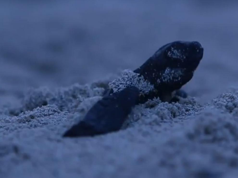 Imagen del videoclip de Amaral