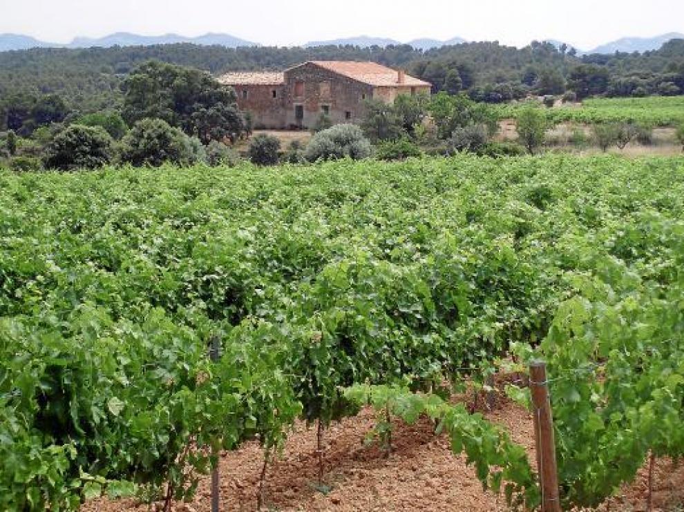 La finca está actualmente integrada por 38 hectáreas de viñedos.