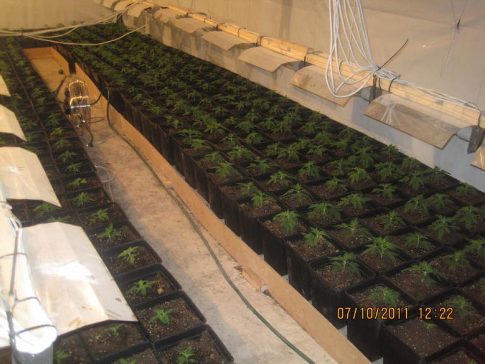 El invernadero estaba dotado de todo tipo de tecnologías para favorecer el crecimiento de la marihuana.