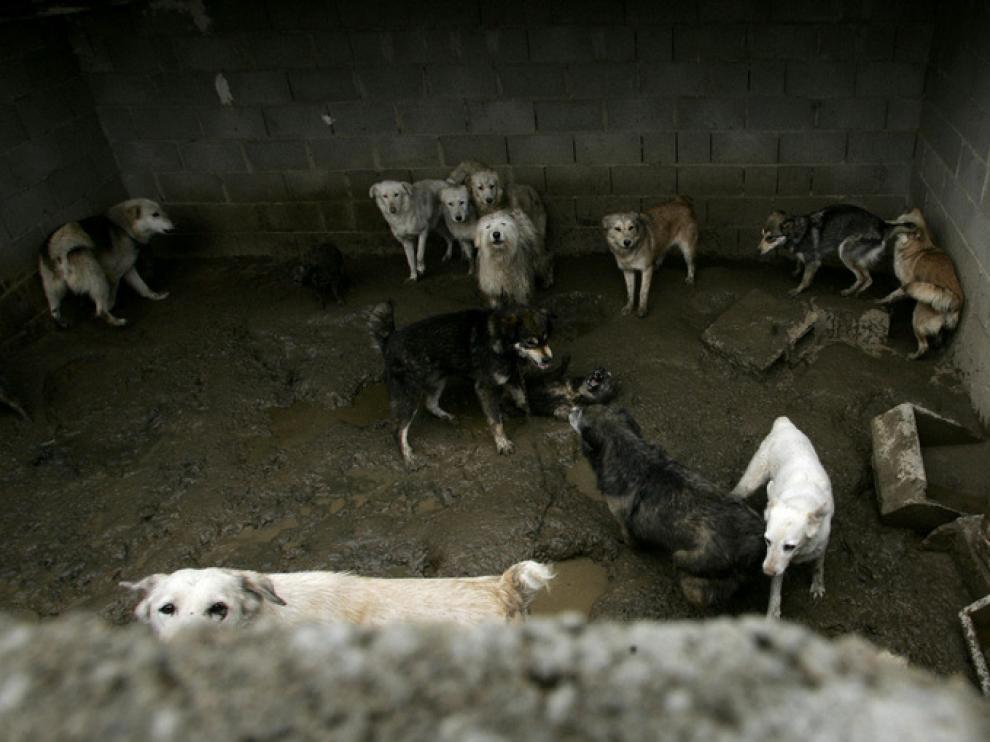 Denuncia por no alimentar a 22 perros en Fañanas, Huesca.