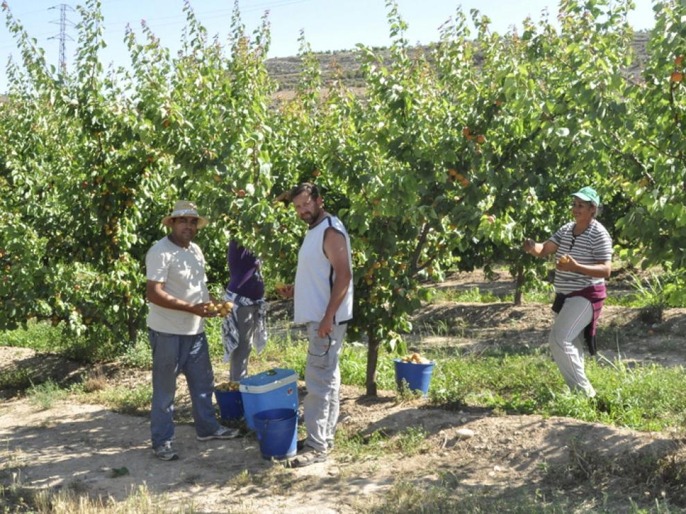 Imagen de un campo de fruta de Fraga