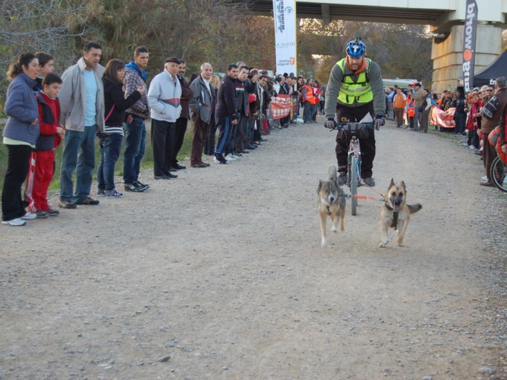 XX Travesía de Monegros con Perros de Tiro